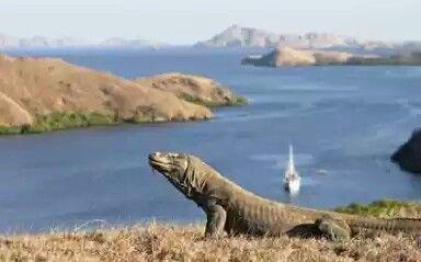 Komodo Island _Nusa tenggara 'timur (Indonesia )