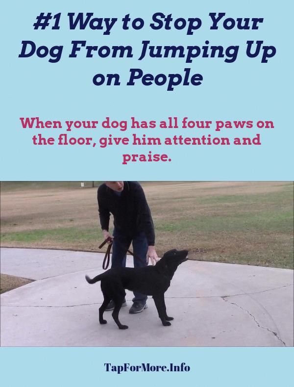 Stop Dog Jumping And Commands To Teach Your Dog Check The Pin