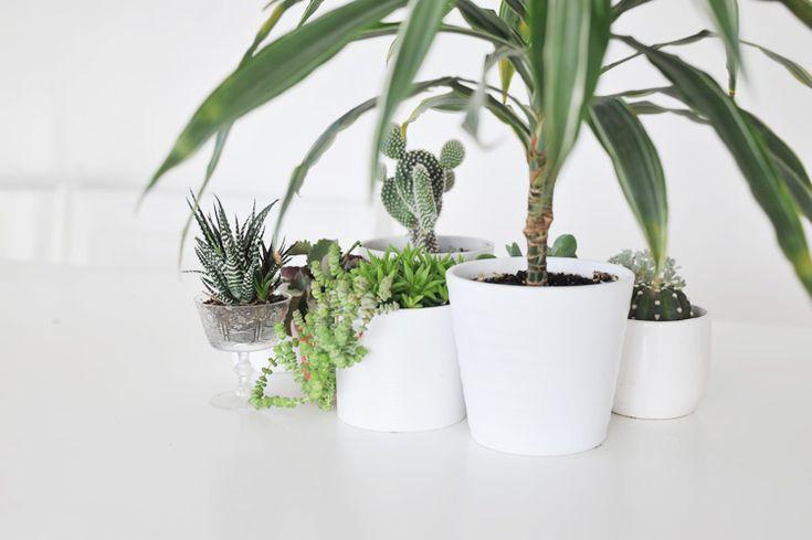 1000 ideas about zimmerpflanzen pflege on pinterest hauspflanzen kr utergarten k che and. Black Bedroom Furniture Sets. Home Design Ideas