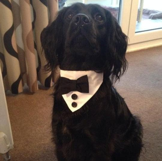 Dog Tux Bandana Bow Tie For Collar by BowWowTiesNewcastle on Etsy