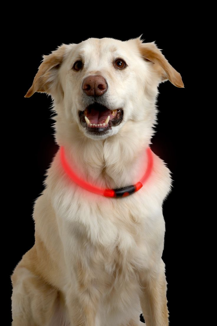 16 best pet safety and fun images on pinterest pet products