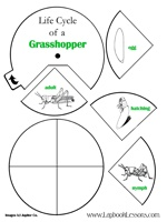 Grasshopper life cycle wheel and other insect activities
