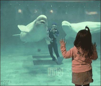 【GIF画像】このイルカのGIFで感動した奴wwwwwwwwwwwwwwwww:キニ速
