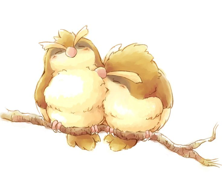 Pidgey Cuddles. I'm not even a fan of pidgey but this is adorable.