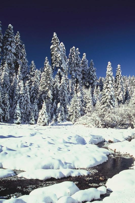 Snowed meadows - Pertouli, Greece