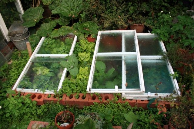 Sub cateva ferestre vechi David creste salata si varza si brocoli