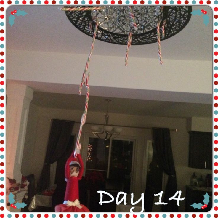 Twinkle Toes hanging from the chandelier with candy canes!