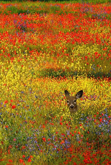 Deer in a flower meadow