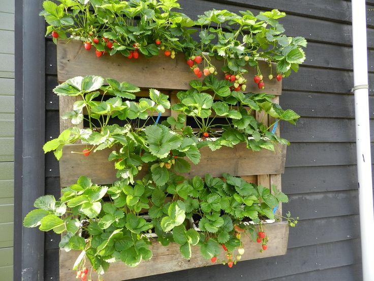 aardbeien in een pallet