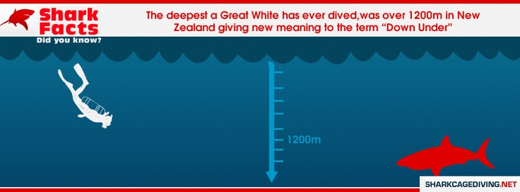 The deepest a Great White Shark has ever dived was 1200m in New Zealand.