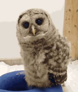 """Owl: you got a problem bro? Do you?!? Yeah that's what I thought... Yeah go on. LEAVE."""""""
