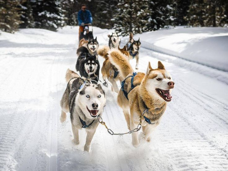 Dogsledding becoming a popular winter adventure for in New Brunswick http://buff.ly/2kodt7n. Lovely animals. https://t.co/YK8hYWUJCm