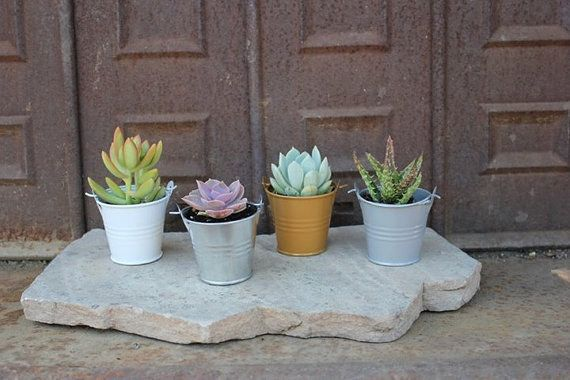 This teensy bucketed clan of succulents. | 19 Tiny Plants To Cheer Up Your Sad Work Desk
