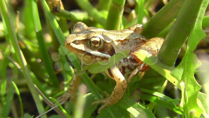 $15 - Bog frog