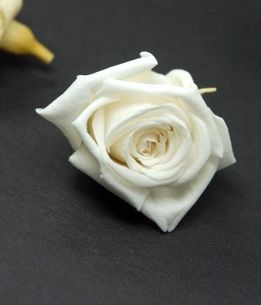 """Preserved Roses 1"""" Rose Heads White (12 roses)  For Snow White cake"""