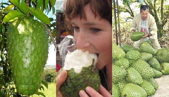 Πολλοί άνθρωποι καιειδικοί απ'όλο τον κόσμο υποστηρίζουν ότι αυτό το φρούτο είναι το πιο ισχυρό φυσικό αντικαρκινικόστον κόσμο! Ειδικοίέχουν ανακαλύψει, επίσης, ότι αυτό το φρούτο είναι 10.000 φορές πιο ισχυρό από τη συμβατική χημειοθεραπεία. Αλλά, όπως