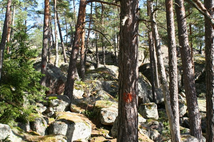 Finland is Europe's most forested country and about 70% of the land is covered with trees.  www.visitporvoo.fi