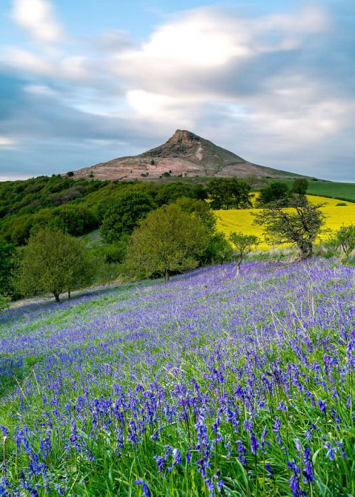 wanderthewood: Roseberry Topping, North Yorkshire, England by Paul Weller