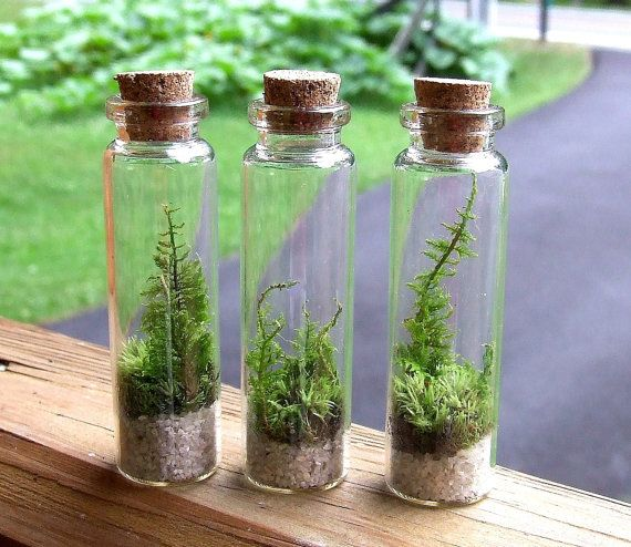 3 Terrariums, TINY FOREST WORLD, with Moss and Ferns, Miniature Glass Terrarium, Terrarium Gift