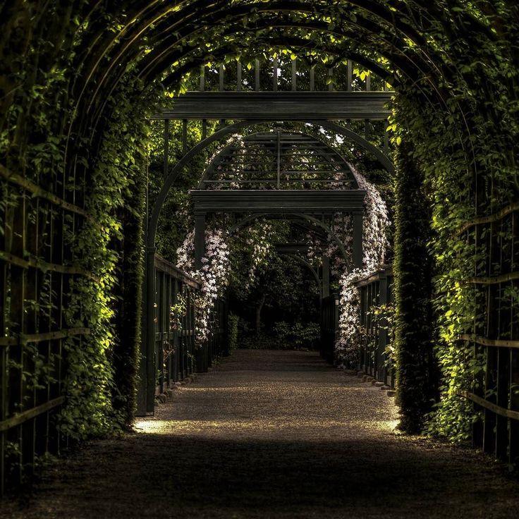 Tajemniczy ogród. #gardenideas #garden #ogrod #wogrodzienajlepiej