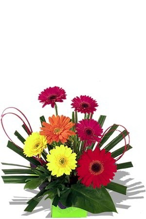 Paradise    This beautiful arrangement of rainbow coloured Gerberas interspersed with Tropical Leaf, Palm Leaf and Spear Grass and decorated with creative hot pink sticks is a great way to cheer up anyone. Express your personality to someone with colour!