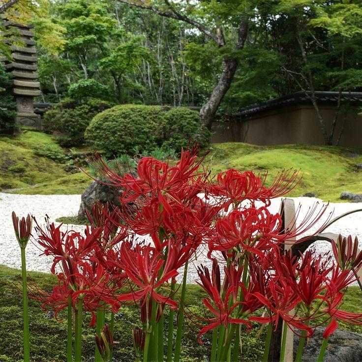 今年の旅を振り返る編。。。 9/17は仙台でVAMPS😀 の前の時間を有効に使って寺社巡り。。。 でも。。。雨なんだな☔️なぜなら台風が来ていたから😨 円通院、瑞巌寺、鹽竈神社にいた時点で降っていなかったのですが。。。 仙台市内の入り、仙台東照宮についた頃にはかなり強く降ってきましたよ💀 ライブ前はだいぶ降っていて、終わった時には台風だいぶ来てまして。。。朝には風だけ残して去っていたのでした(笑) . 2017/9/17 . #宮城県 #円通院 #瑞巌寺 #灯籠 #鹽竈神社 #階段 #牛タン利久 #仙台東照宮 #vamps #underworld #仙台pit #2017 #今年の旅を振り返る編