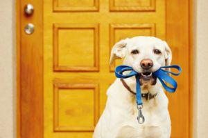 Takara Industry Pet Dog Door For Screens