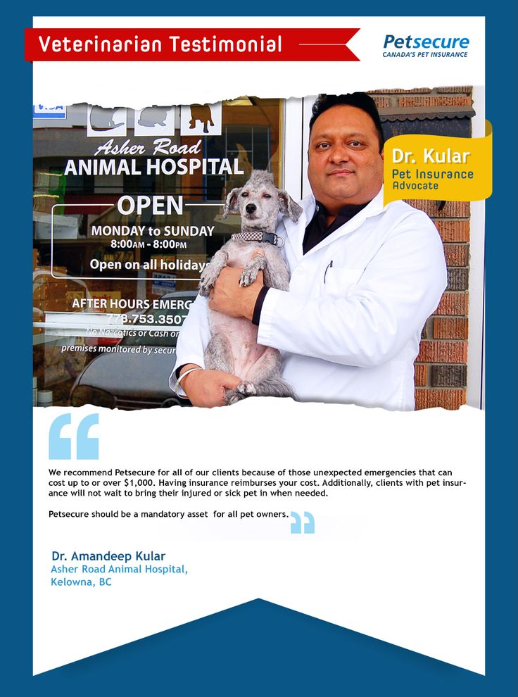Here are some kind words about Petsecure from Dr. Kular at Asher Road Animal Hospital in Kelowna. We love seeing veterinarians across Canada promoting pet health insurance and helping to keep your pets healthy and happy