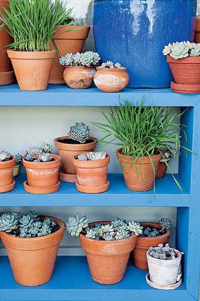 A pequena estante acomoda várias plantas nas prateleiras