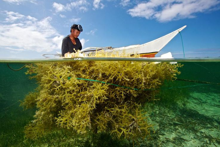 Kerja Berat Sang Laut - by Agus Supangat http://ow.ly/Lfsmx  @susipudjiastuti