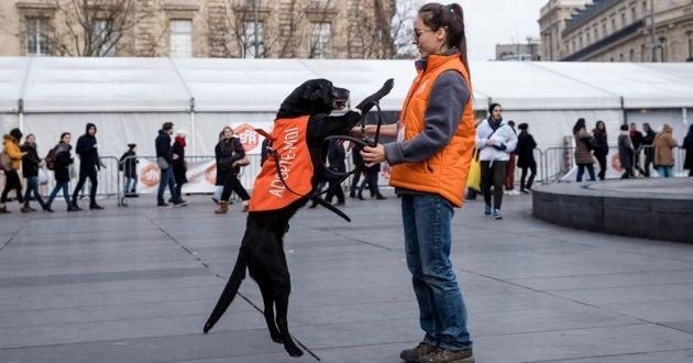 525 chats et chiens ont été adoptés au Noël des animaux de la SPA à Paris !