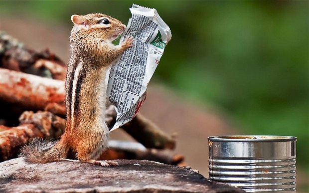 This hungry chipmunk must be a real health nut, as it appears to be reading through the list of ingredients on a breakfast bar wrapper before tucking in. Keen photographer Michael Higgins spotted the chipmunk looking as though he was reading a newspaper while on a camping trip at Algonquin Provincial Park in Ontario, Canada.