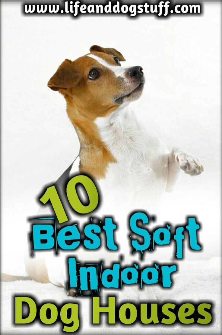 10 Greatest Smooth Indoor Canine Homes For Small Canines
