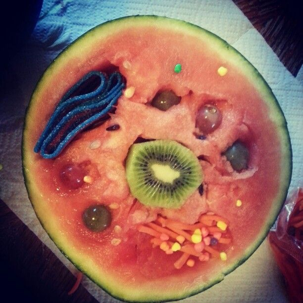 Edible animal cell for elementary science project