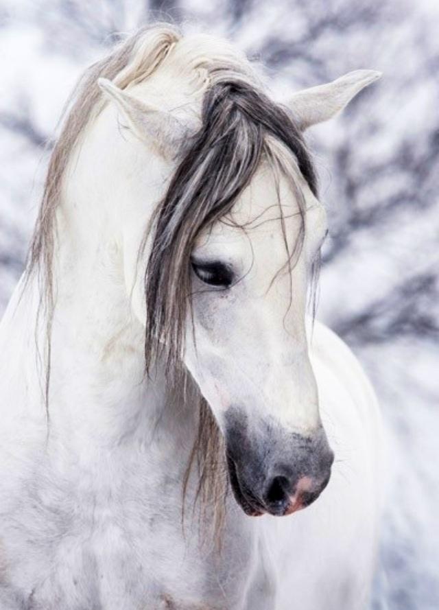 297 besten pferde bilder auf pinterest tiere natur und wei e pferde. Black Bedroom Furniture Sets. Home Design Ideas
