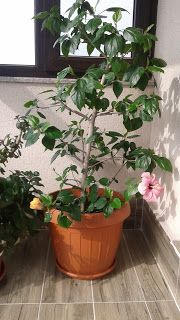 Blog personal: Sarbatoarea Floriilor http://www.bijuteriifrumoase.ro/