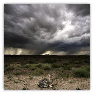 """La imagen """"Storm Eye"""" de Elliott McDowell Incluida en la Oración para Desastres Naturales"""