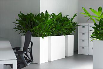 Luwasa ist Ihr Partner für grüne Oasen in der Wohnung und im Garten, setzt Akzente mit dekorativen Pflanzen, Gefässen und Dekorationen. Luwasa bietet Pflege an, Pflanzenleasing, Terrassenbegrünung und Hilfe beim Umzug mit den Pflanzen.  #interiordesign#hydrokultur#bepflanzung#zimmerpflanzen#wohnstyle#lifestyle  www.wohn-punkt.ch