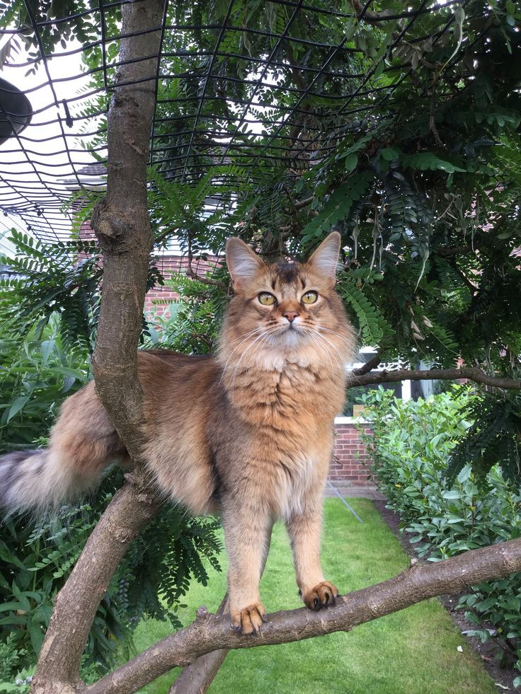 protectapet ltdu0027s photos cat in a tree cat fence