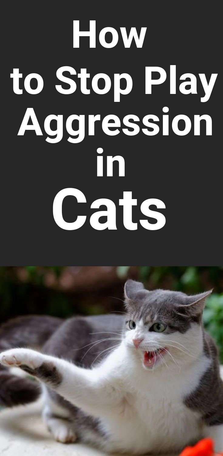 How To Stop Play Aggression In Cats One Of The Things That People Love The Most About Their Cats Is How Playful They Are Ho Cat Training Cats Kittens Playing