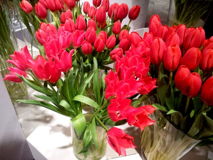 Pretty Woman tulips :)