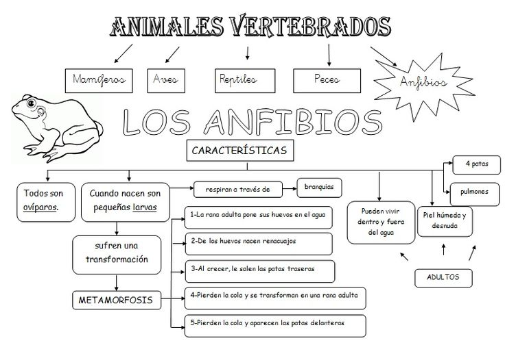 MIS COSAS DE MAESTRA*: Animales Vertebrados: Esquemas | glenda ...