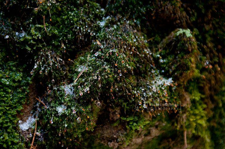 Brtníky - Vlčí potok