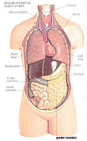 24 best Anatomy Show images on Pinterest | Human anatomy, Human body ...
