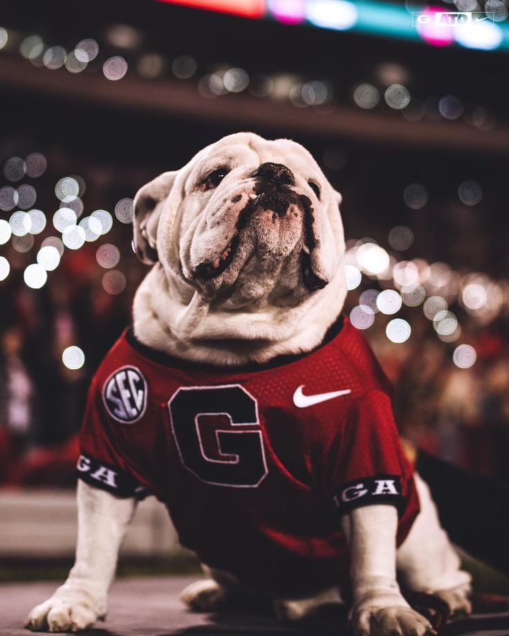Georgia Football On Instagram One Proud Pupper Atd