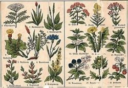 Listado de nuevas plantas para jardines verticales