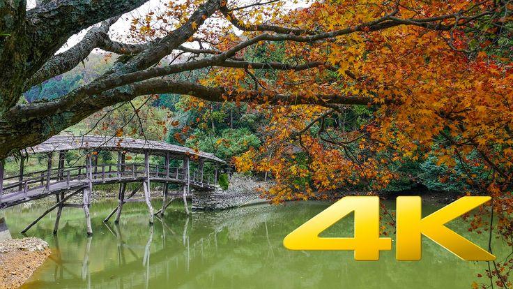 Yuge Shrine and the Taiko Bridge - Ehime - 弓削神社の太鼓橋 - 4K Ultra HD 🎑 🍂 🇯🇵