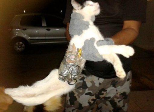 ¡¡Armado hasta los bigotes!! Atrapan gato que intentaba meter contrabando en una cárcel de Brasil