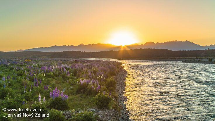 Lupiny u řeky Eglinton, Fiordland, Nový Zéland