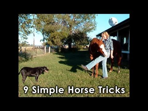 Horse Tricks 101 - 9 Simple Horse Tricks - YouTube